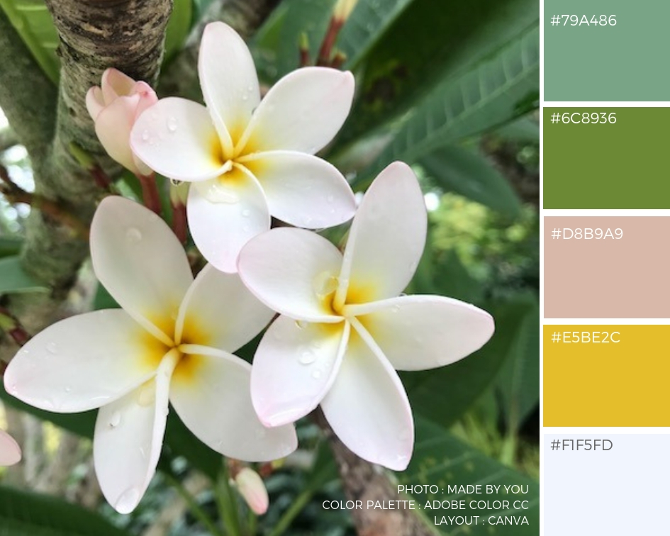 Color Palette Flower Edition Made By You