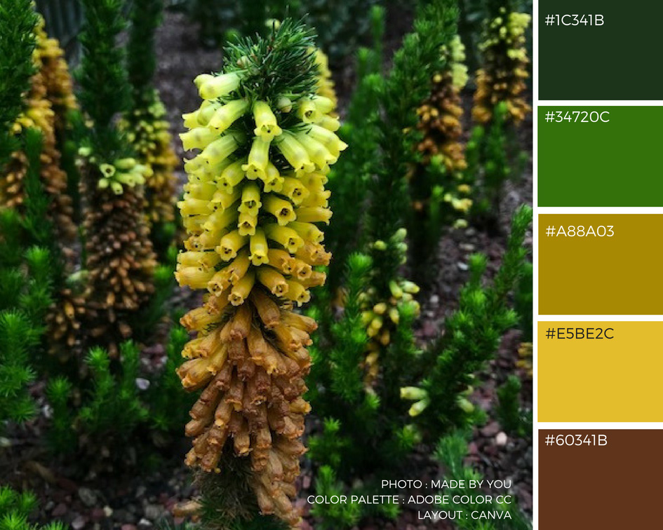 Made By You - Article blog - Palette de couleur - Flower Dome du Gardens By The Bay à Singapour Unknown Australian Flower