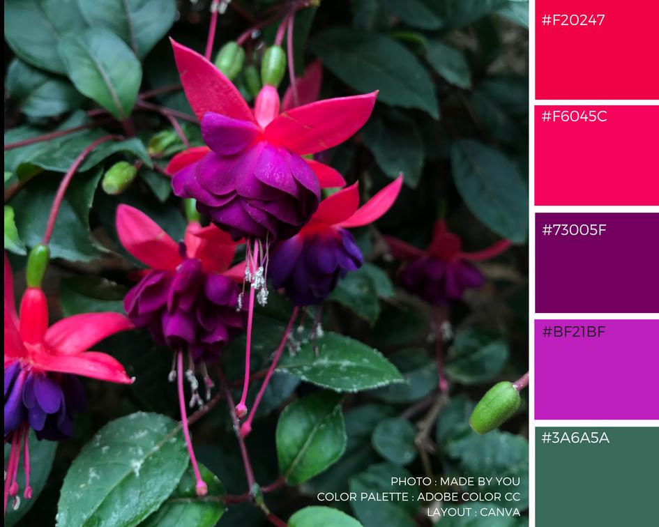 Made By You - Article blog - Palette de couleur - Flower Dome du Gardens By The Bay à Singapour Fushia