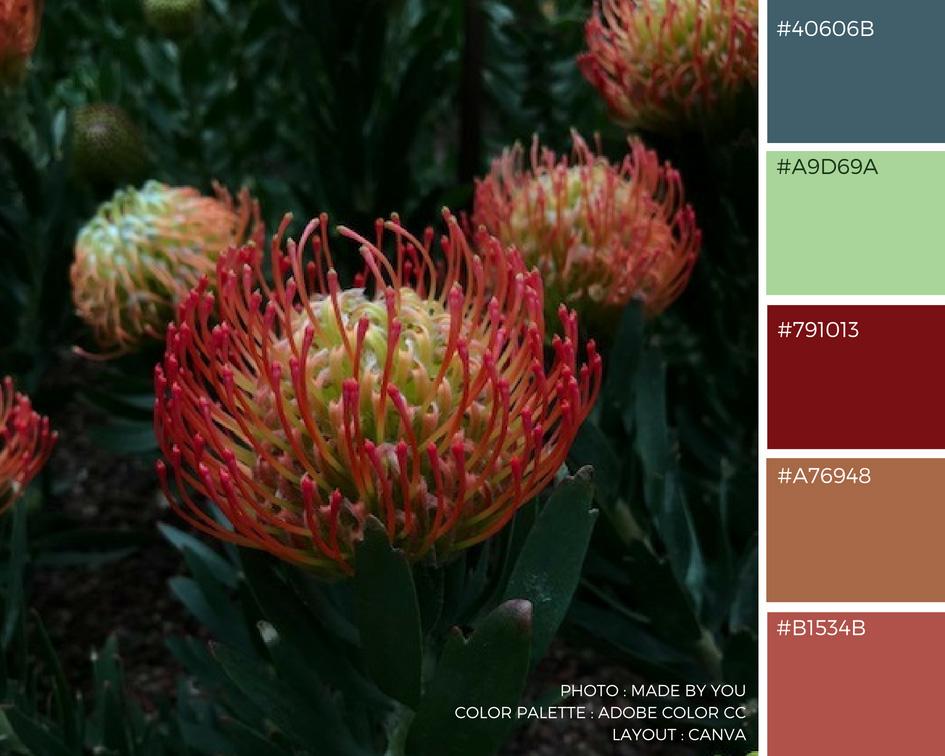 Made By You - Article blog - Palette de couleur - Flower Dome du Gardens By The Bay à Singapour Pin Cushion Protea