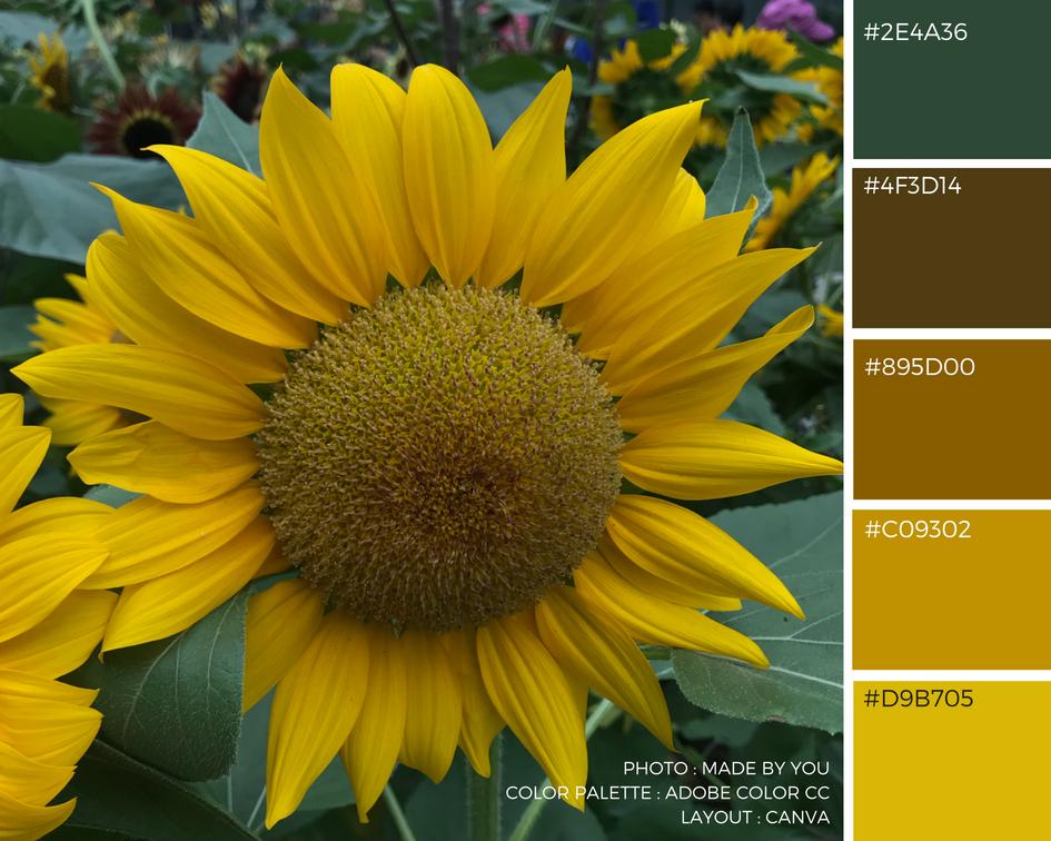 Made By You - Article blog - Palette de couleur - Flower Dome du Gardens By The Bay à Singapour Tournesol